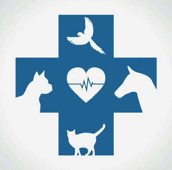 Animal Planet Veterinary Hospital
