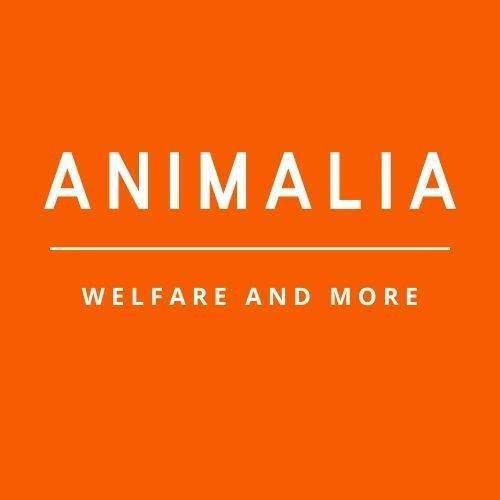 Animalia  Welfare and More