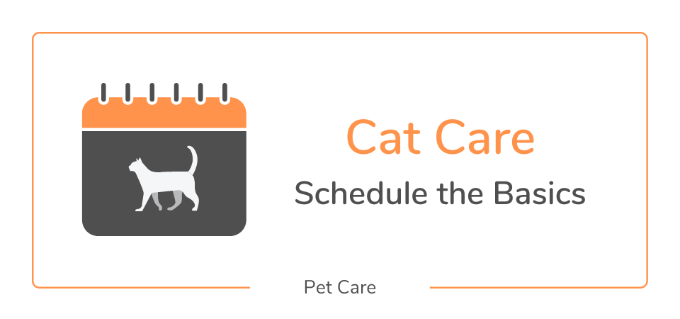 Cat care guide & schedule