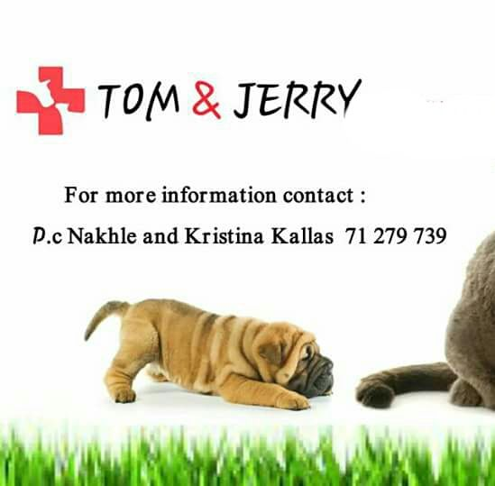 Tom & Jerry Veterinary Hospital