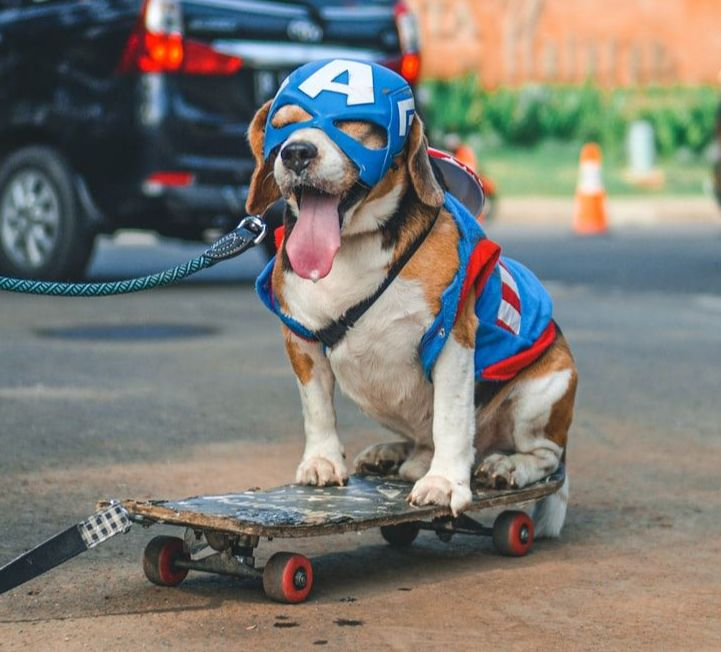 Unsplash - Pet Dog Skateboarding - Pet Safety